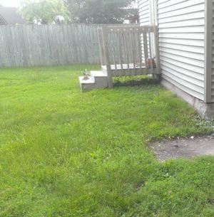 Backyard Dassel